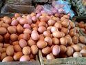 Rugi karena Harga Telur Ayam Hancur, Peternak Berencana Apkir Dini