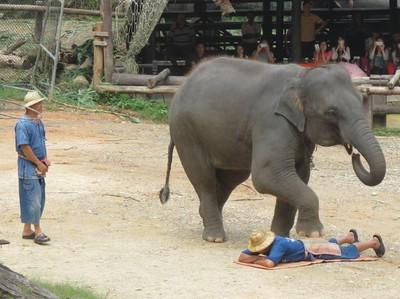 Di Balik Derita Corona, Ada Gajah-gajah yang Bahagia