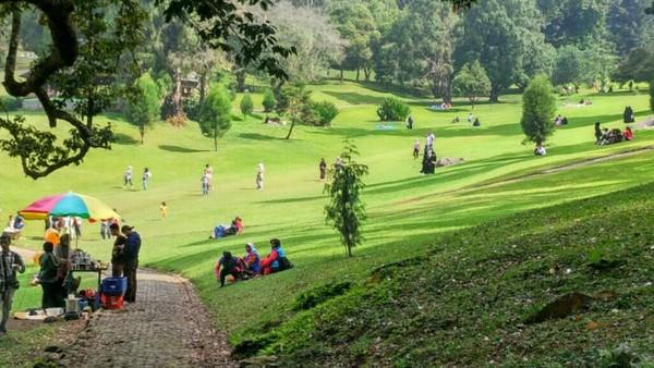 Selain Kebun Raya Bogor, Kebun Raya Cibodas di Puncak juga tak boleh dilewatkan. Mulai dari taman sakura, air terjun, rumah kaca hingga Taman Rhododendron, bisa dijumpai di sini (Eko Pujiansah/dTraveler)