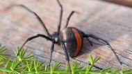 Bukan Karena Lapar, Mahasiswa Ini Telepon Layanan Pesan Antar untuk Usir Laba-laba