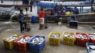 Ikan di Daerah Tangkapan Murah, Tapi Distribusinya yang Jadi PR