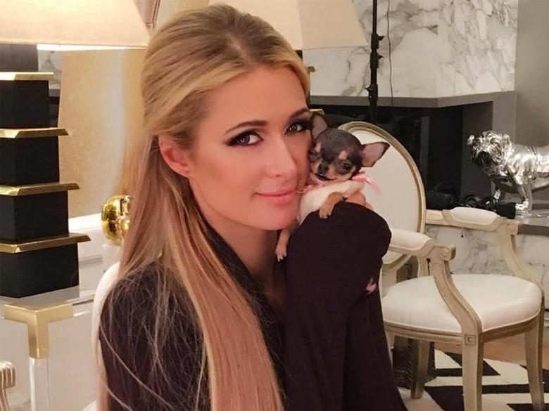 Paris Hilton Pamer Anjing Peliharaan Baru Seharga Rp 104 Juta