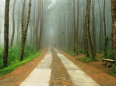 Menyibak Kabut Hutan Pinus Kragilan yang Lagi Hits di Sosmed