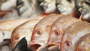 Perhatikan 4 Hal Ini Saat Menyimpan Ikan dalam Lemari Es