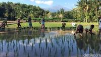 Desa Wisata Tete Batu, Angin Segar untuk Wisata NTB