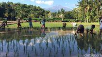 Jadilah Desa Wisata, Agar Tidak Ada Urbanisasi ke Kota