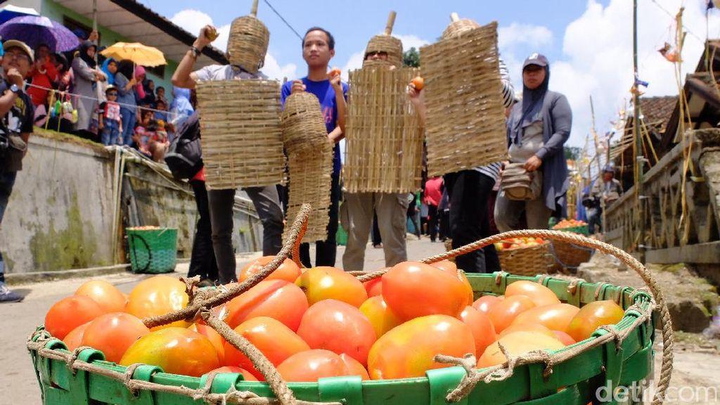 Bukan Hanya di Spanyol, Tradisi Perang Tomat Juga Ada di Bandung