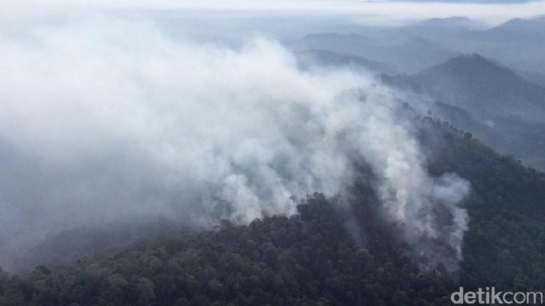 Kawasan Hutan Lindung Bukit Betabuh di Riau Terbakar