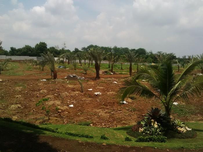 Ilustrasi pohon kurma (Foto: Muhajir Arifin).