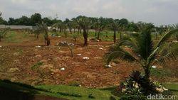 Bukan Tabebuya, Anggota DPRD DKI Ini Usul Cikini Ditanami Pohon Kurma
