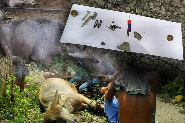 Polisi: Tak Ada Kaitan Bom yang Tewaskan Kerbau dan Ledakan Motor di Sleman