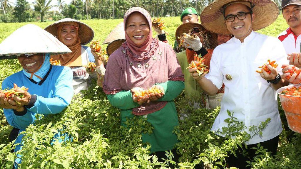 Banyuwangi Kembangkan 190 Ha Lahan untuk Tanam Cabai