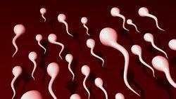 Hati-Hati! Gondongan Berisiko Ganggu Produksi Sperma