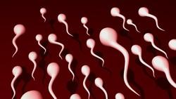5 Cara Memperbanyak Sperma, Termasuk Rutin Konsumsi Pisang