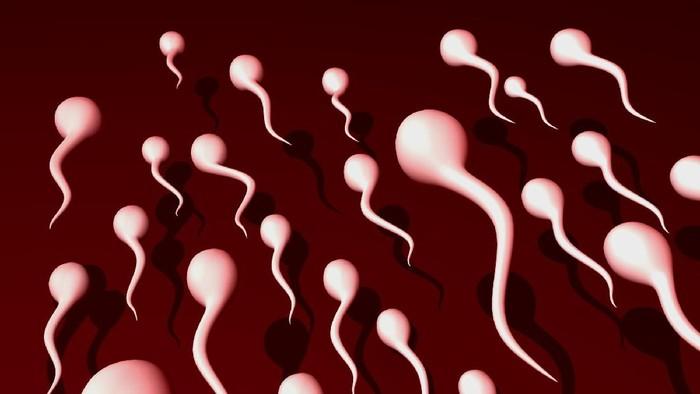 ilustrasi sperma