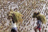 Misteri Suku Banjar yang Bermigrasi dan Jadi Nenek Moyang Orang Madagaskar
