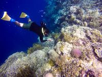 Menyelami keindahan Pulau Menjangan