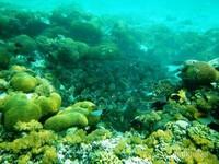 Naik lagi ke atas, daratan Sulawesi ada Takabonerate. Berada di Sulawesi Selatan, inilah atol yang disebut-sebut terbesar ketiga di dunia (Rahmaliza/dTraveler)