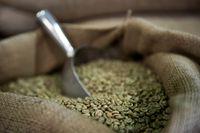 Apa Benar <i>Green Coffee</i> Bisa Turunkan Berat Badan Secara Efektif?
