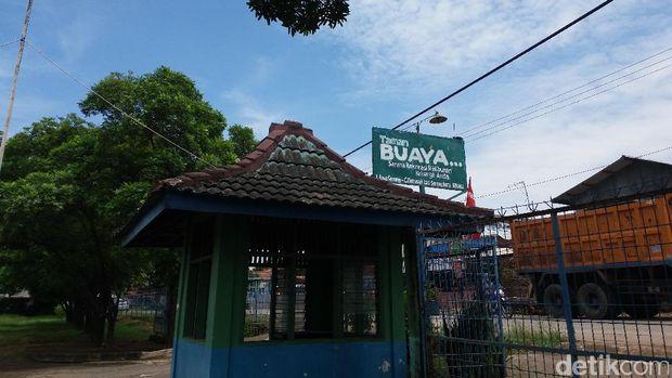 Menengok Taman Buaya di Bekasi, antara Penangkaran dan Atraksi