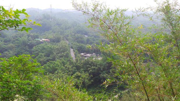 Pemandangan hijau yang ada di menara pandang (Wahyu/detikTravel)