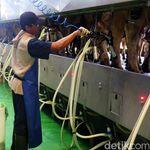 RI Mau Perkuat Industri Susu, Pengusaha Minta Perhatikan Harga