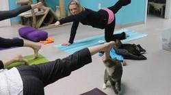 Sekelompok wanita dari Atlanta, Amerika Serikat melakukan yoga sembari bermain dengan kucing-kucing lucu. Tertarik mencoba?