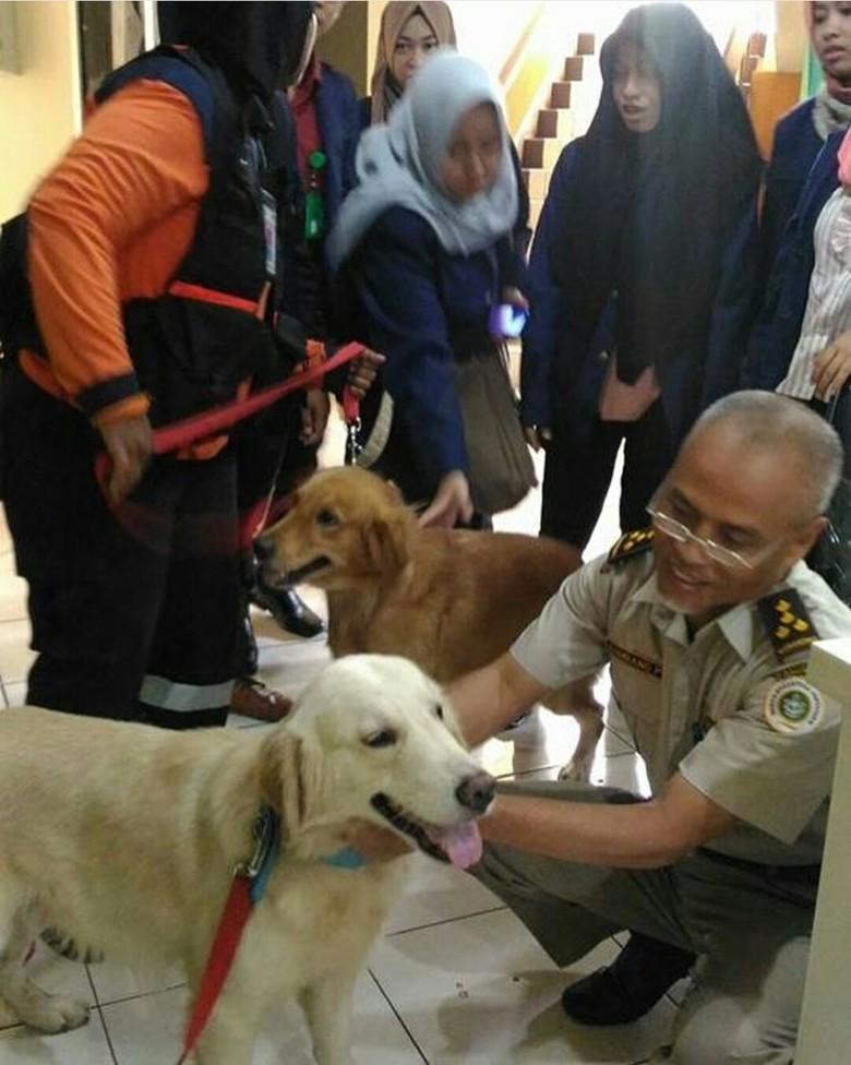 Dua Anjing SAR Alfa dan Delta Diterjunkan ke Aceh Cari Korban Gempa