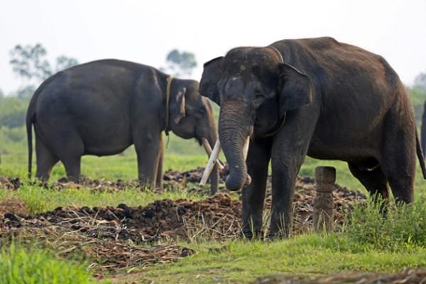 Kamu ingin bertemu gajah, datang saja ke Taman Nasional Way Kambas. Lokasi ini adalah tempat pelatihan, perlindungan dan konservasi gajah Sumatera. Kamu bisa nih belajar sekaligus berinteraksi dengan gajah.(Thinkstock)