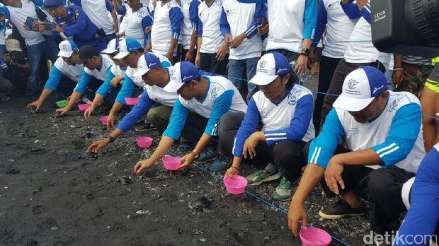 Melepas tukik di Pantai Grand Watu Dodol Banyuwangi