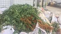 Izin Ekspor Produk Pertanian Dipangkas Jadi 3 Jam