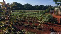 Pemerintah Usul Pemudik Diberi Pekerjaan di Bidang Pertanian