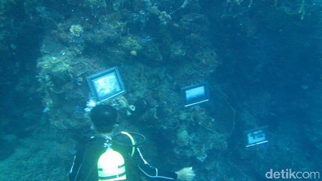 Pameran Foto Bawah Laut di Morella Pecahkan Rekor Muri