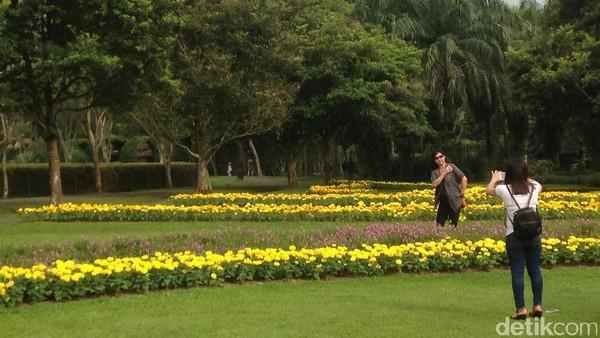 Traveler yang singgah ke Puncak bisa sekalian melihat keindahan alam di Taman Bunga Nusantara yang terletak di Sukaresmi, Cianjur. Ada begitu banyak bunga cantik di sana (Afif/detikTravel)