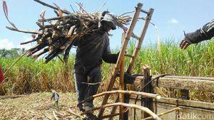 Petani Jual Gula akan Dibebaskan dari Pajak Penghasilan