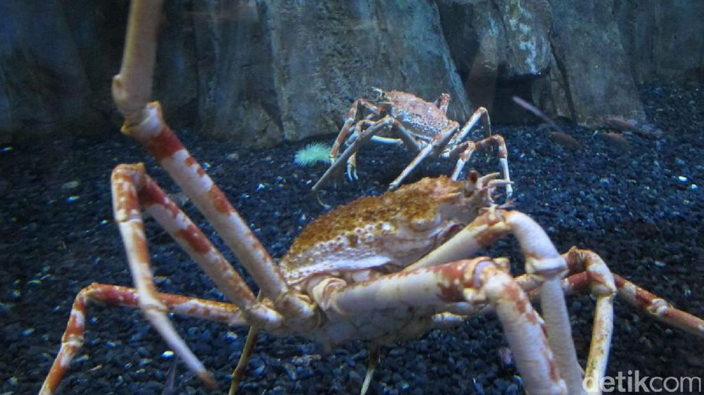 Kepiting Laba-laba & Piranha di dalam Mal Dubai