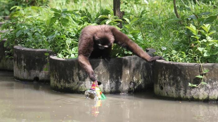 Duh Pengunjung Kebun Binatang Surabaya Buang Sampah