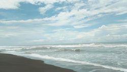 Pantai Goa Cemara Rumah Penyu Hijau dan Penyu Lekang