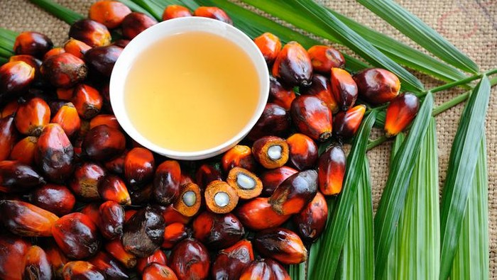 Would Banning Palm Oil Increase Sustainability?