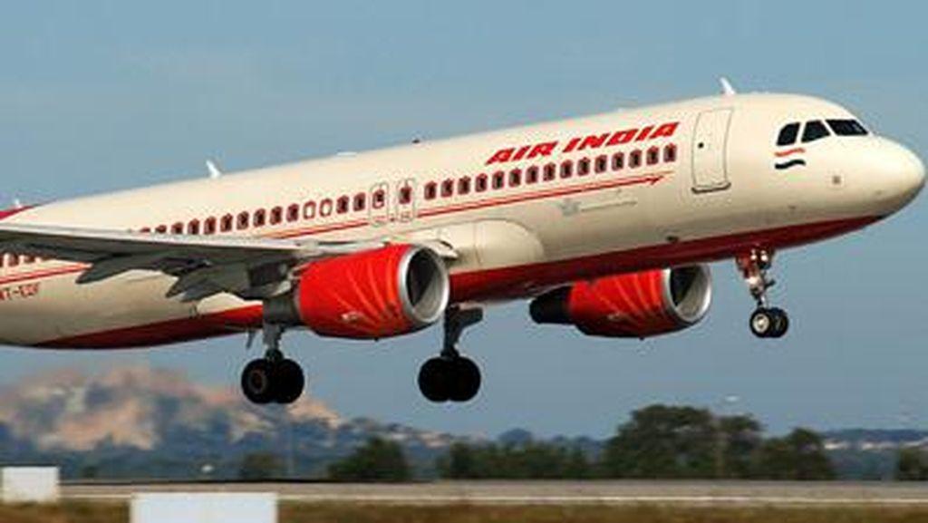 Kawanan Lebah Bikin Pesawat Air India Tertunda Berjam-jam