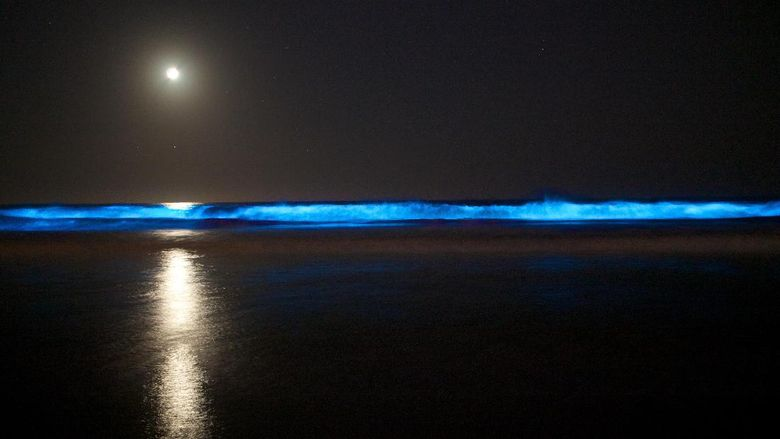Cahaya di air oleh aktivitas plankton