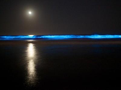 Laut Pantai Selatan Jawa Bercahaya, Itu Cara Fitoplankton Caper