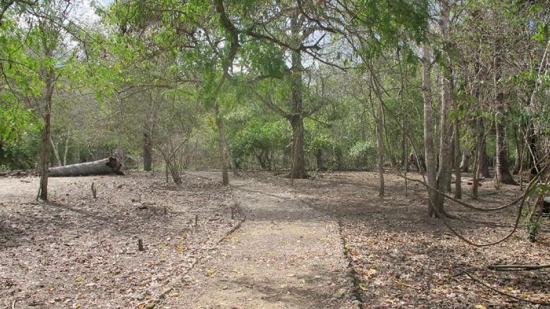 Inilah jalur trekking Rossi untuk bertemu Sang Naga Purba (Afif/detikTravel)