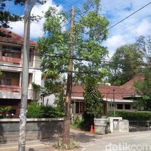 Ini penjelasan Pemkot Bandung Soal Pemangkasan Pucuk Puluhan Pohon di Dago