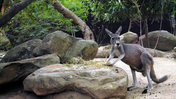 Kebun binatang di Sydney