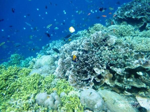 Di sini kamu bisa temukan ekosistem terumbu karang, bakau, dan puluhan jenis ikan. Tentu saja warna-warni. (Mega Ditta/dtraveler)