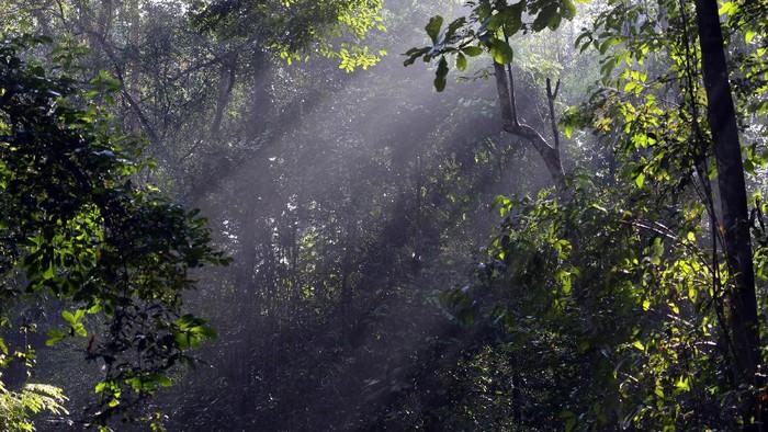 Foto: Ilustrasi hutan di Way Kambas (Thinkstock)