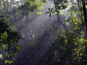 3 Binatang Buas Serang Warga di Riau, Pertanda Habitatnya Terusik?