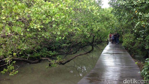 Jembatan kayu sepanjang 3 Km (Zainal/detikTravel)