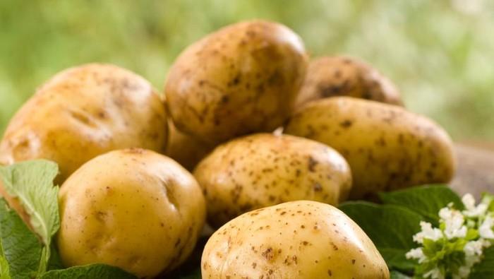 Kentang punya banyak manfaat sehat lho! Studi terbaru dari Amerika Serikat menyebut kentang bisa mencegah penyakit jantung hingga kaya vitamin. Foto: iStock